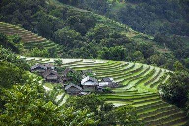 saison d'eau rizières en terrasse