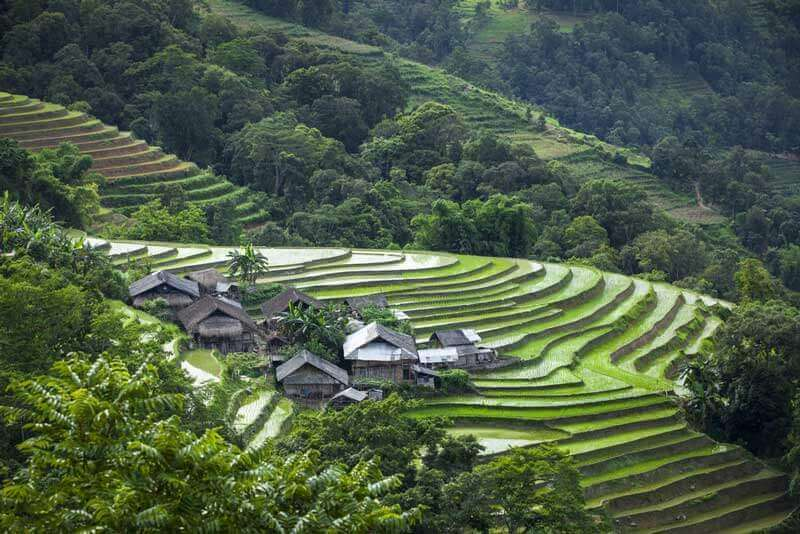 rizières terrasses nord vietnam