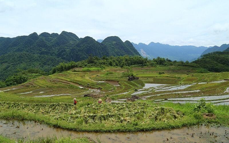 rizières en terrasses et karsts dans la réserve naturelle de Pu Luong Amica Travel