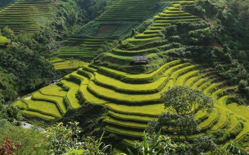 écologie voyage asie