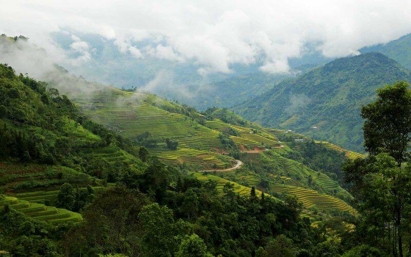vue sur les rizières en terrasse