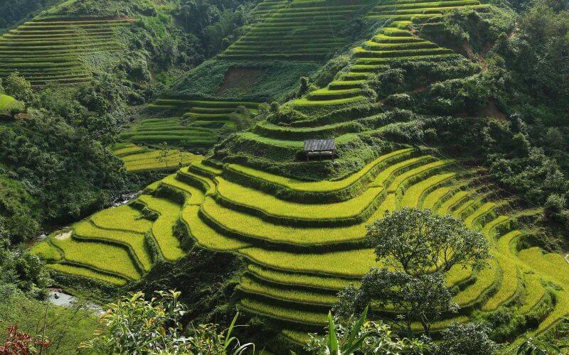 rizieres en terrasse hoang su phi