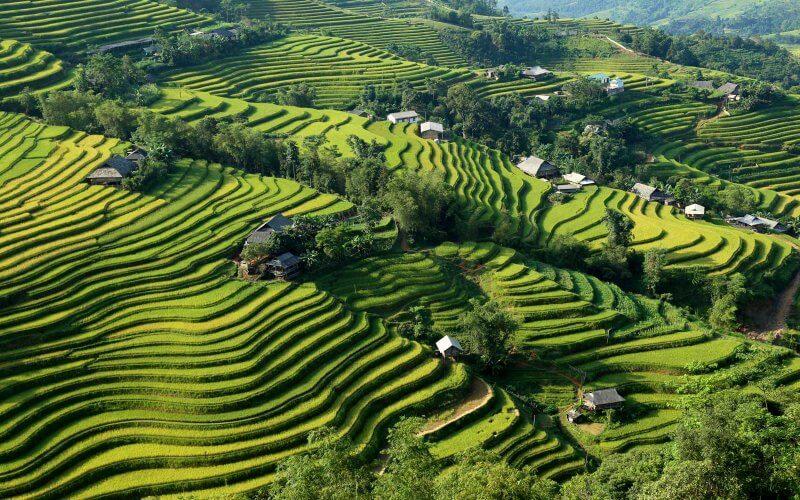 rizieres en terrasse ha giang