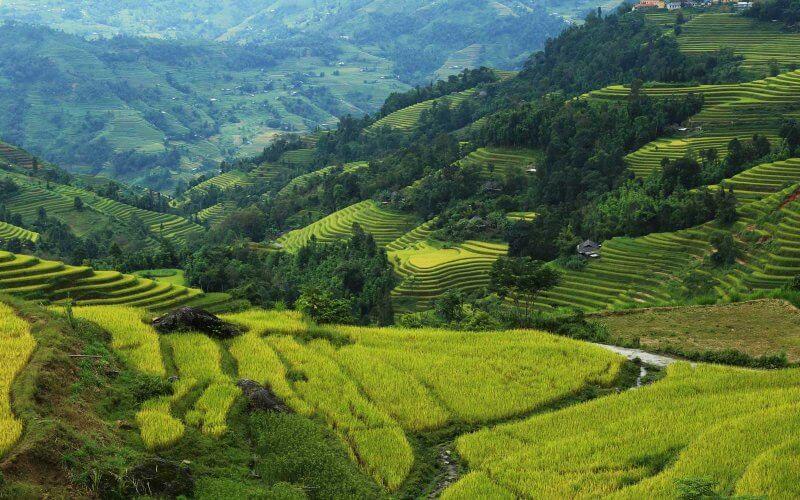 rizieres en terrasse tay con linh