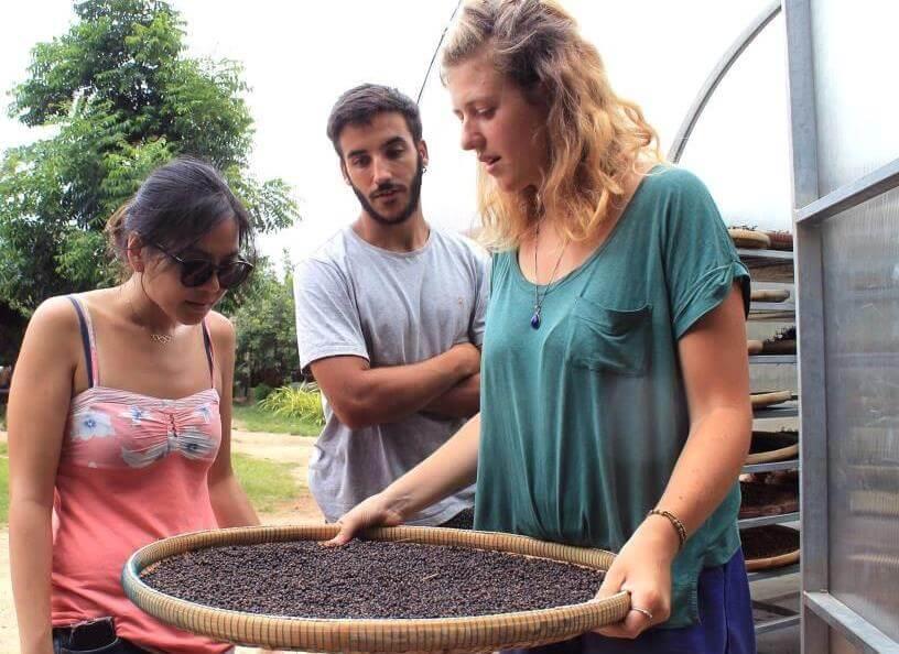bénévoles poivre kampot