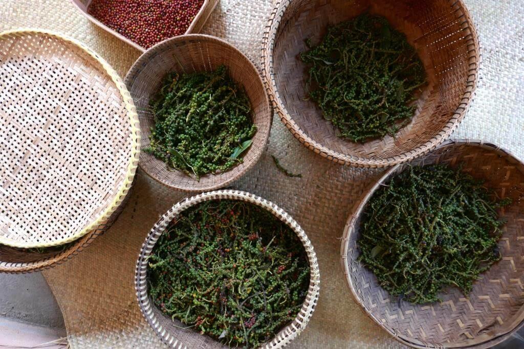 baies poivre Kampot